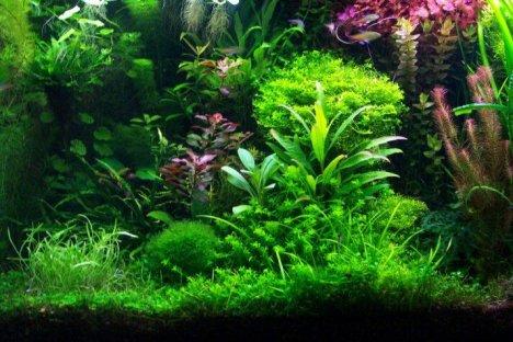 aquarium plantstropical fish and discount aquarium supplies fish for aquariums 468x312