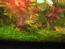 aquarium plant photo